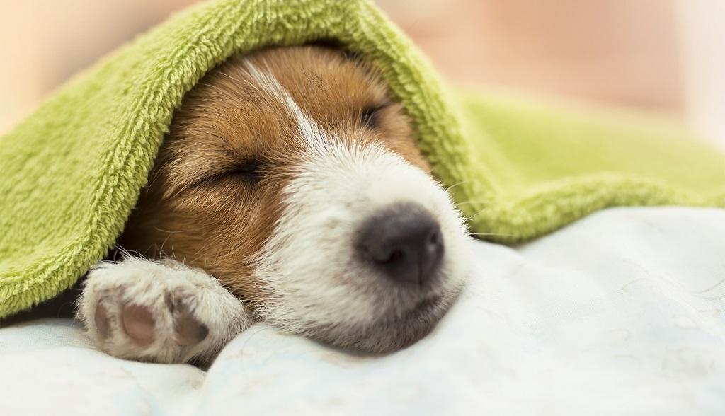 Jak wybrać legowisko dla psa?