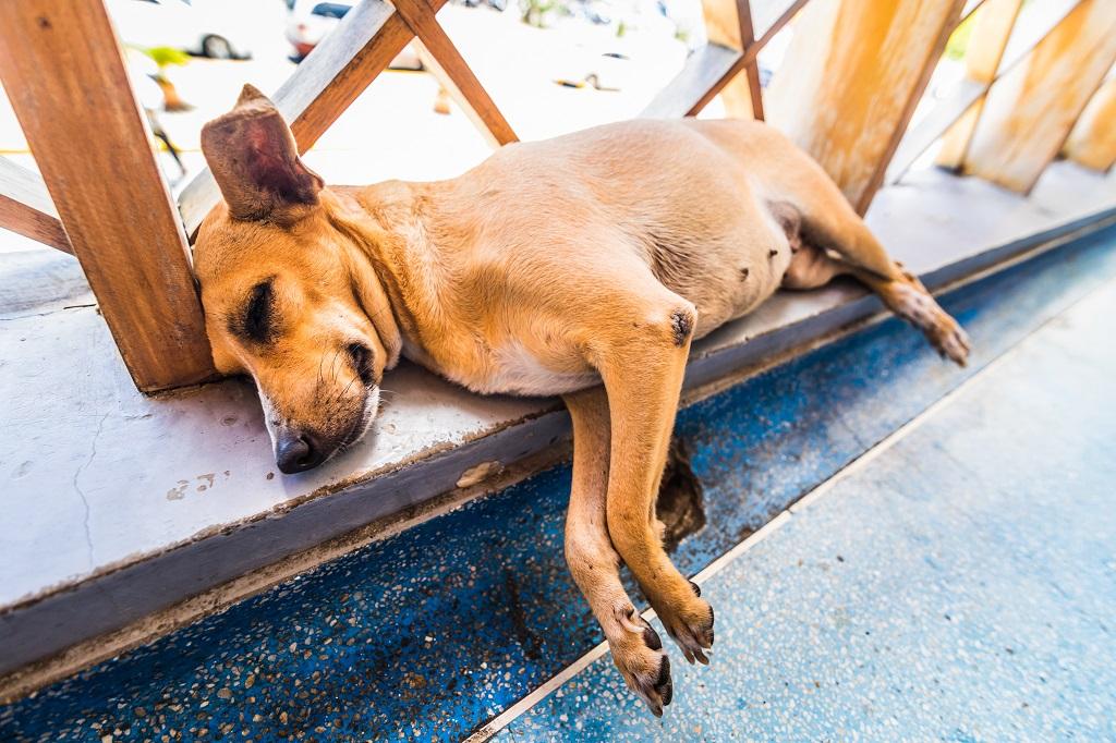 Przepisy prawne przydatne dla posiadaczy psów!
