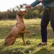 Szkolenia dla psów